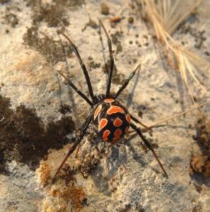 && 2 && spider-175582