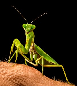 && 3 && praying-mantis-220996